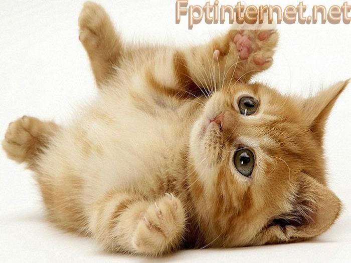 Ngủ Mơ Thấy MÈO Báo Hiệu Điềm Gì? Đánh Đề Số Nào? 2 FPT INTERNET - Lắp Mạng FPT - Lắp Wifi FPT - Lắp Internet FPT