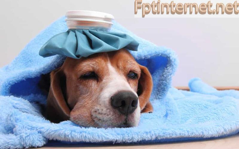 Ngủ mơ thấy chó báo hiệu điều gì? TỐT hay XẤU?Nên đánh con số gì? 1 FPT INTERNET - Lắp Mạng FPT - Lắp Wifi FPT - Lắp Internet FPT