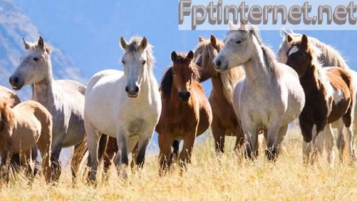Ngủ mơ thấy ngựa mang nhiều ý nghĩa khác nhau