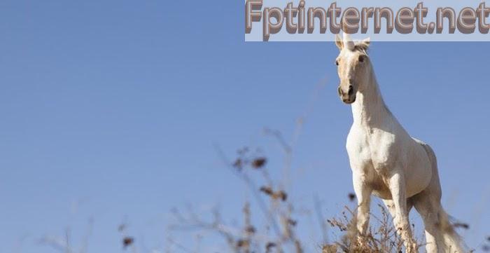 Ngủ MƠ THẤY NGỰA Báo Hiệu Điều Gì? Tốt Hay Xấu? Đánh Số Gì? 8 FPT INTERNET - Lắp Mạng FPT - Lắp Wifi FPT - Lắp Internet FPT