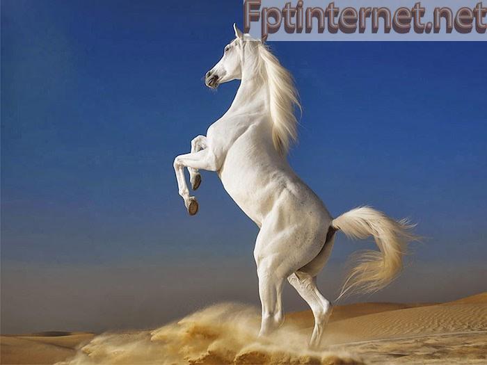 Ngủ MƠ THẤY NGỰA Báo Hiệu Điều Gì? Tốt Hay Xấu? Đánh Số Gì? 2 FPT INTERNET - Lắp Mạng FPT - Lắp Wifi FPT - Lắp Internet FPT